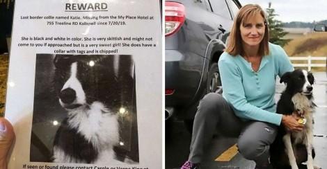 Mulher larga o emprego e passa 57 dias procurando cachorro desaparecido até o encontrar