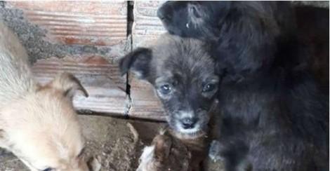 Cães em situação extrema de maus tratos são resgatados no interior de SP
