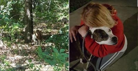 Cachorrinha perdida reencontra dona que procurou por ela durante 8 anos