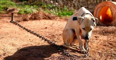 Em vigor: Lei proíbe deixar cães acorrentados ou presos em canis em Florianópolis