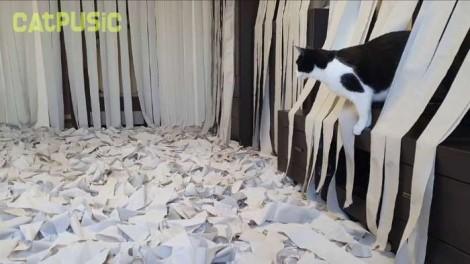 Gatinho fica 'alucinado' ao ver sala recheada de papel higiênico - veja vídeo