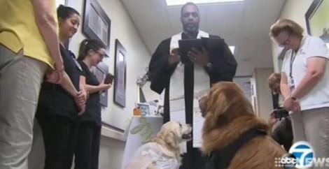 Casamento entre cães terapêuticos faz sucesso na internet; veja o vídeo