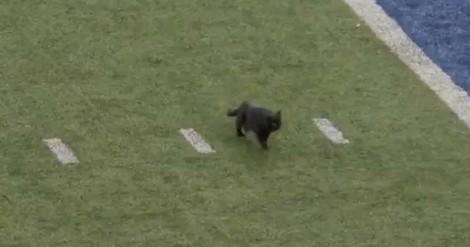 Gatinho preto invade campo de futebol e leva público ao delírio