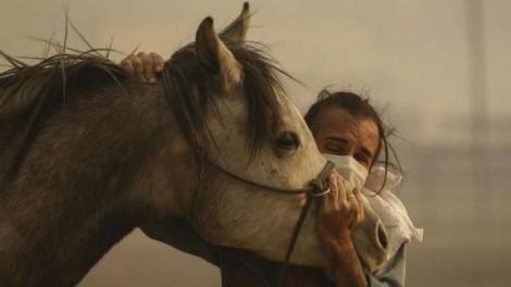 Em meios aos incêndios da Califórnia, cavalo resgatado retorna para salvar sua família
