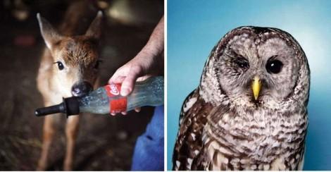 Fotógrafa faz ensaio com animais feridos: 'Somos mais parecidos com eles do que pensamos'