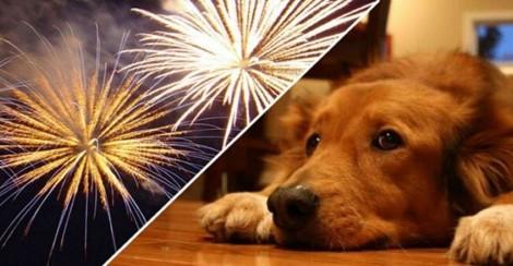 Empresa cancela show com fogos de artifício e destina dinheiro para ONG de proteção animal