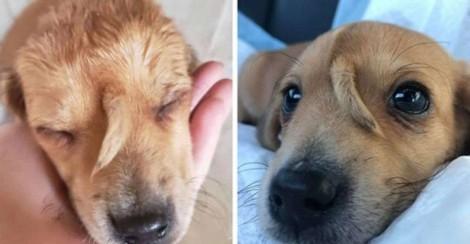 Família adota cachorro e descobre uma cauda crescendo em sua testa