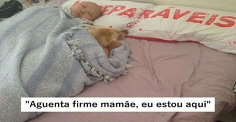 Cachorrinha se recusa a sair de perto de sua dona com câncer: 'Minha companheira'
