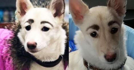 Cachorrinha ignorada por adotantes por nascer com rosto 'diferente' encontra dono perfeito graças às redes sociais