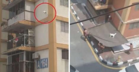 Gato 'perdido' no alto de prédio cai de altura de 30 metros e é salvo no chão