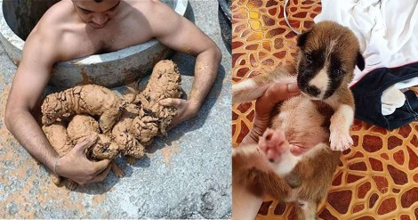 Tailandês encontra filhotes recém-nascidos de cão cobertos por lama, dá banho, alimentação e os adota