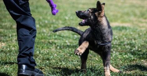 Se ferrou: bandido cai de árvore e sofre lesões ao tenta fugir de cão farejador em cidade mineira