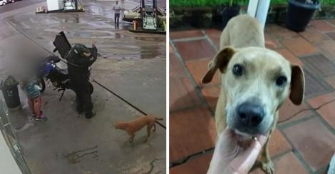 Final Feliz: Cãozinho que foi agredido com facão é adotado em Carazinho (RS)