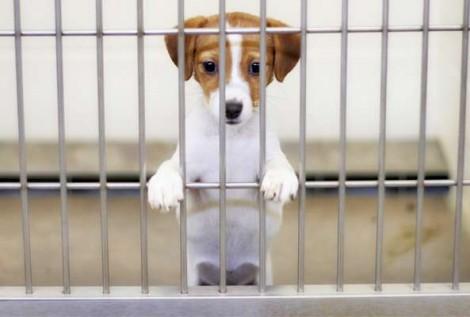Golpe: Morador de Guarujá compra cão pela internet, paga mais de mil reais e não recebe o animal