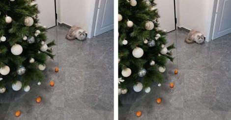 Mulher usa bergamotas para cercar e proteger árvore natalina de seu gato que odeia a fruta