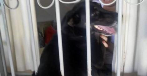 Perigo: Cachorrinha assutada tenta fugir de fogos e fica presa em grade