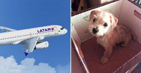 Latam é condenado por morte de Cachorrinha em Voo de Manaus a Brasília