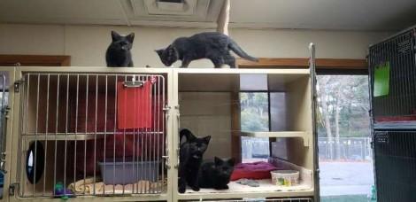 """Gatinhos que sempre aprontam """"confusão"""" em abrigo, agora tentam virar """"rolezeiros"""""""