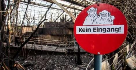 Polícia suspeita que lanternas chinesas proibidas provocaram incêndio em zoológico da Alemanha