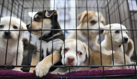 Com multas de R$ 10 mil, Justiça proíbe venda de pets em vias públicas do DF