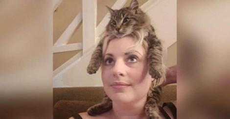 Freddy, o gatinho que adora se camuflar como um chapéu em cima da sua dona