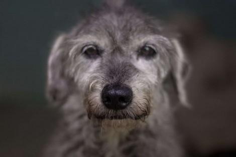Jovem comovida pela perda de sua cachorrinha, cria ensaio de fotos para promover adoção de cães idosos