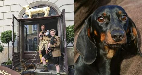 Museu alemão dedicado à raça dachshund recebe 3.500 itens de doador belga