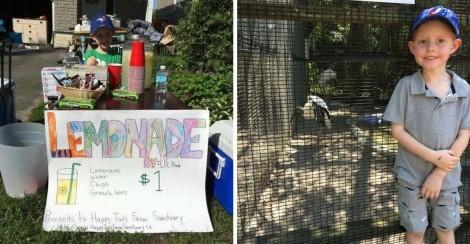 Menino abre banquinha de limonada e destina 100% dos lucros para animais de abrigo