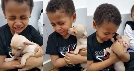 Menino encontra cachorrinha Chihuahua e começa a chorar: 'Ela é linda demais'