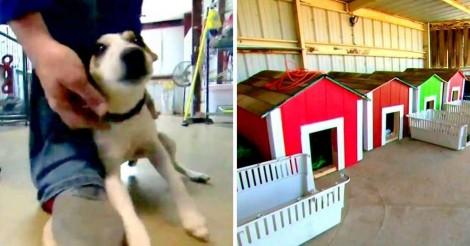 Jovens constroem casinhas durante tempo livre de escola e doam para abrigo de cachorros