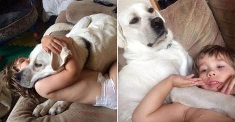 Família encontra paz ao adotar cão labrador que 'trata' crises de criança autista