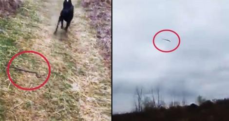 Para proteger dono, cão dobermann ataca cobra e a arremessa para outra 'dimensão' (veja o vídeo)