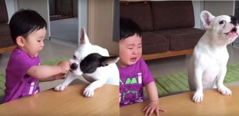 Após roubar biscoito de criança, buldogue francês chora junto com garoto e vídeo faz sucesso na internet