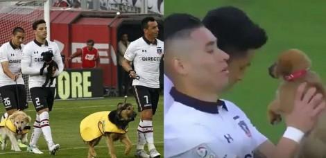 Incentivando a adoção, jogadores de futebol entram em campo com cães de abrigo