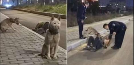 Cães leais cuidam de dono que caiu alcoolizado na rua, não saindo de perto dele