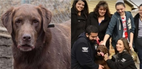 Labrador é resgatado de cativeiro e reencontra sua família após cinco anos longe (veja vídeo)