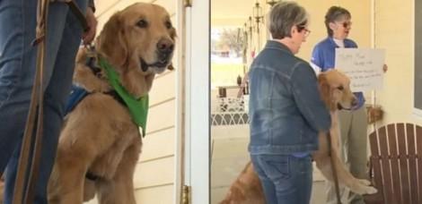 Coronavírus: Casa de repouso isolada recebe cão terapeuta para aliviar estresse dos idosos