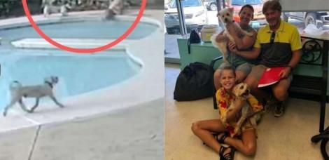 Cachorro pensa rápido e resgata irmãzinha canina que caiu em piscina