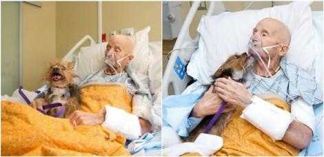 Ex-veterano do Exército internado pede para equipe médica para rever seu cão yorkshire e é atendido