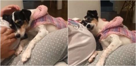 Cadela faz questão de ficar fazendo carinho na barriga de dona grávida e vídeo encanta internautas