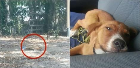 Trabalhador encontra e salva cadela extremamente maltratada por casal usuário de drogas e animal se apaixona por ele