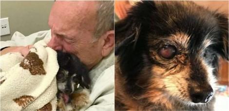 Idoso falece de 'tristeza' por não conseguir superar morte de seu cão de 16 anos