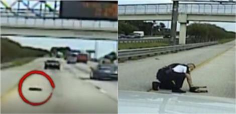 Policial para o carro em via movimentada para salvar cachorro que havia sido atropelado (veja o vídeo)