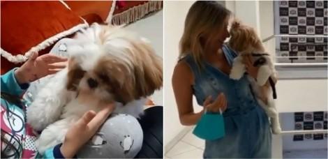 Luisa Mell se revolta com vídeo de criança maltratando cachorro da raça shih-tzu e faz publicação indignada