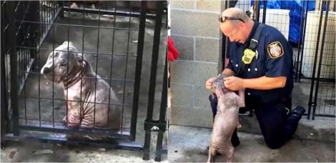 Bombeiro resgata filhote de pit bull em situação de negligência e ela faz questão de agradecer a ajuda