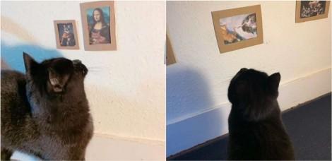 Donos criam galeria de arte em miniatura para o seu gato se entreter durante a quarentena