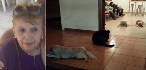 Cães de rua aparecem de surpresa em funeral de idosa que os alimentava