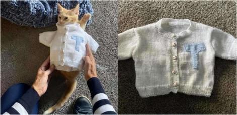 Mãe sem netos tricota suéter para gatinho recém-adotado da filha