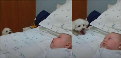 Em vídeo hilário, cãozinho até que tenta, mas não consegue subir em cama para brincar com bebê