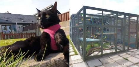 Dono leva 1 ano para criar espaço recreativo enorme em seu quintal para os seus gatos brincarem